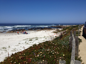 Asilomar beach and flowers